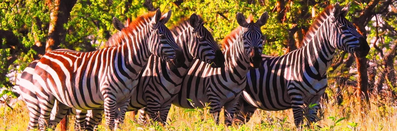 Tanzania Safari Itineraries