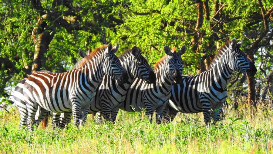 Tanzania day tours
