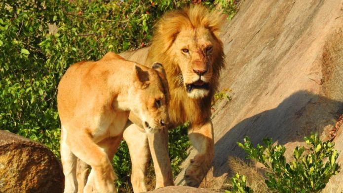 tanzania honeymoon tours