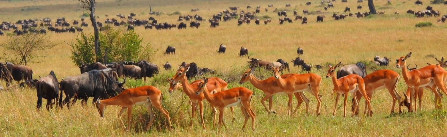 About Balo African Safaris