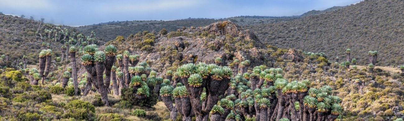 8 Day Kilimanjaro Lemosho Route